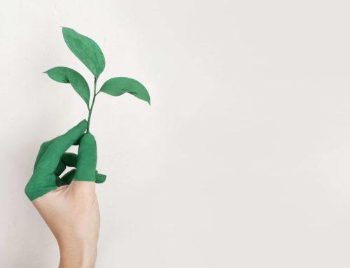 12 Apps für mehr Nachhaltigkeit im Alltag
