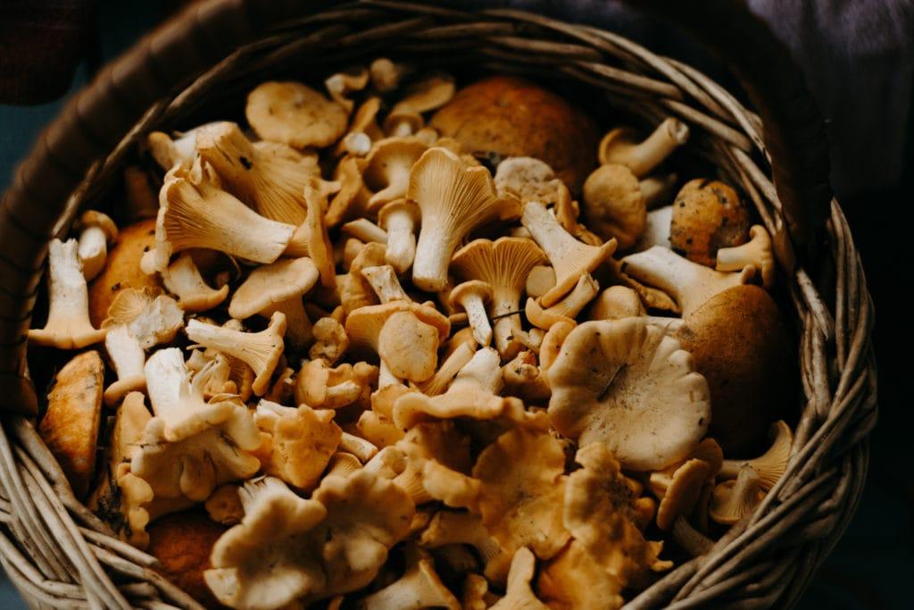 Superfoods im Herbst: 2. Pilze